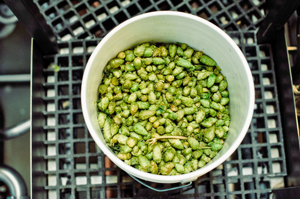 large bucket of hops