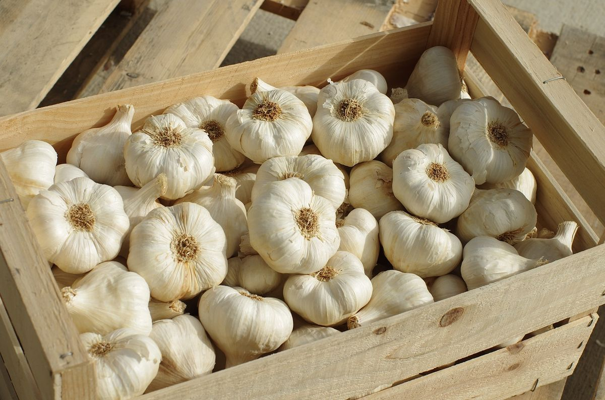 garlic cloves in a wooden crate