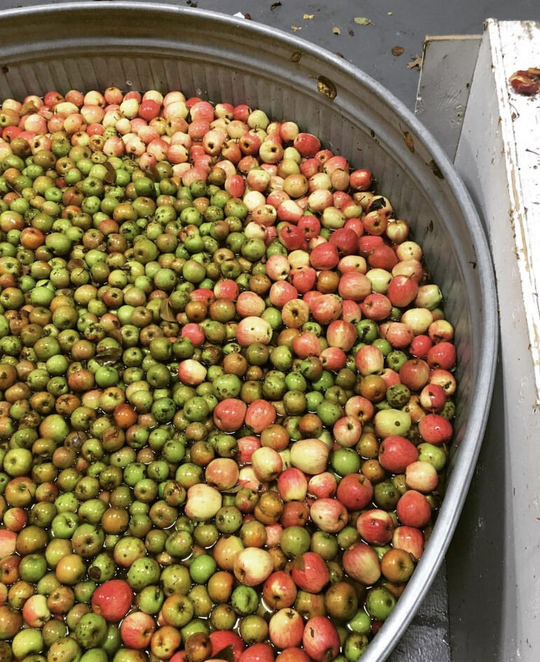 Portland Cider Co. Collecting Unwanted Fruit for Community Cider to Raise Funds for Hungry Children