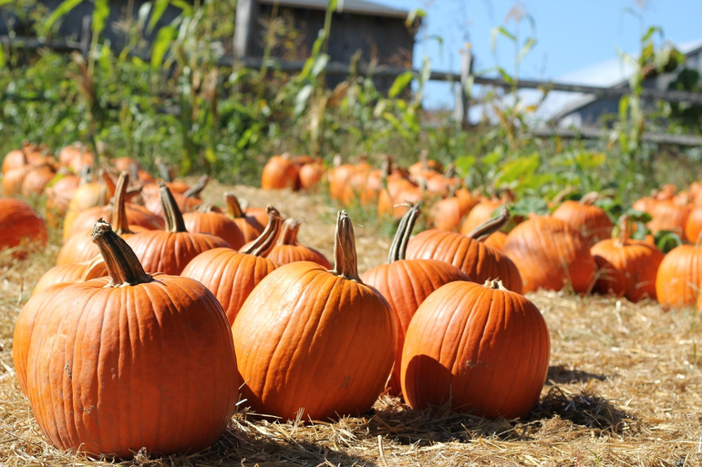 National Pumpkin Month: Great Pumpkin Dishes to Pair with Beers
