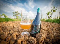 Italian Grape Ales: Why Grapes Aren't Just for Wine Anymore
