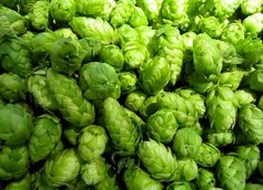 Beautiful Hops