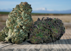 4 Things to Keep In Mind When Buying a CBD Flower Strain