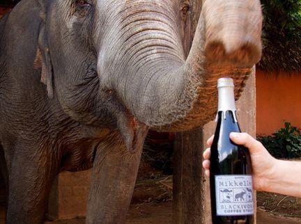 Mikkeller Releases Black Ivory Coffee Stout For Elephant Awareness